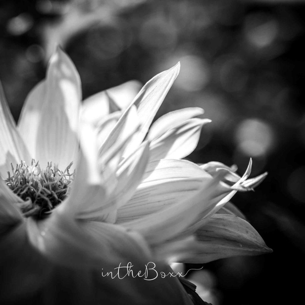 Galerie de vente d'art fleur noir et blanc